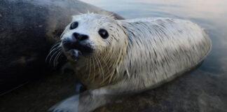 La morte della foca a Londra dovrebbe insegnarci (ma non lo farà)maggior rispetto per ciascuna singola creatura che vive sulla Terra